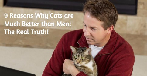why cats are much better than men