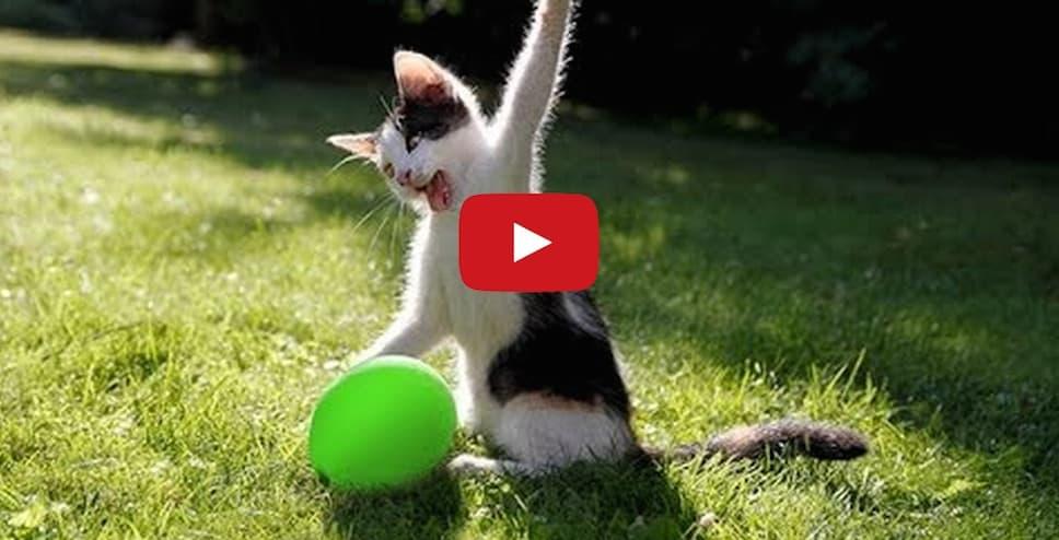 Cats love balloon explosion