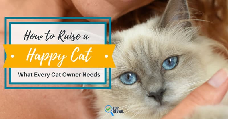 How to Raise a Happy Cat – What Every Cat Owner Needs