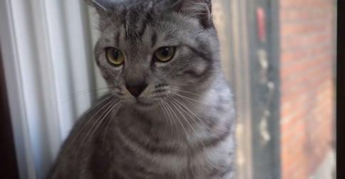 Meet Cat Kalou