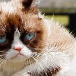 all about grumpy cat