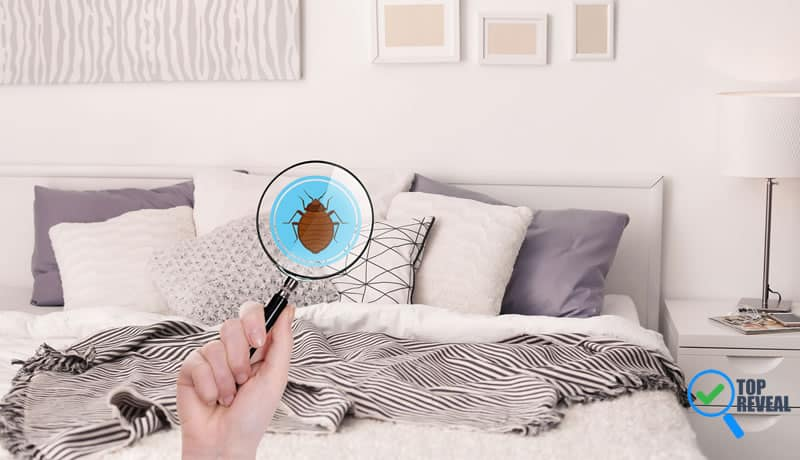 How To Eliminate Bed Bugs Using Steam