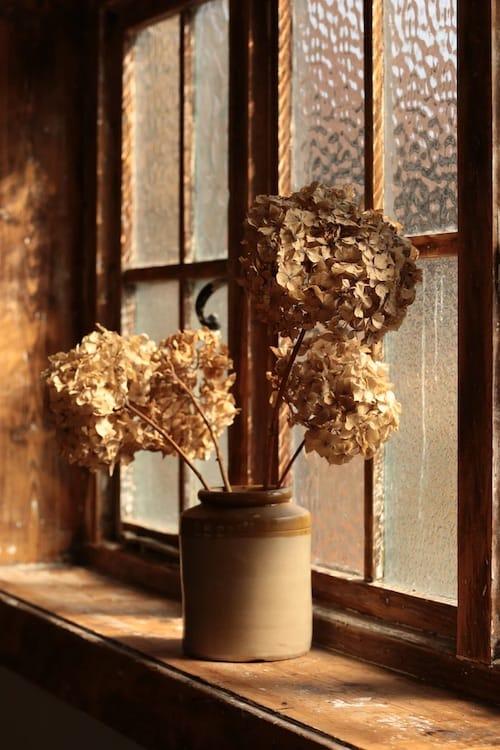 Flower at Window
