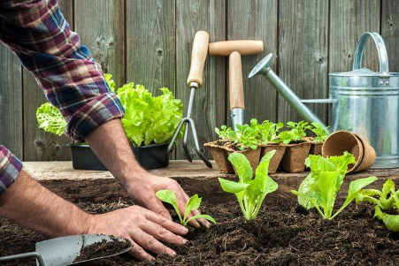 10 Simple Tips To Start A Garden For Beginners