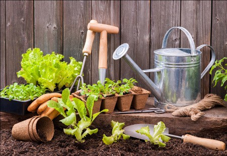 Use the right gardening tools