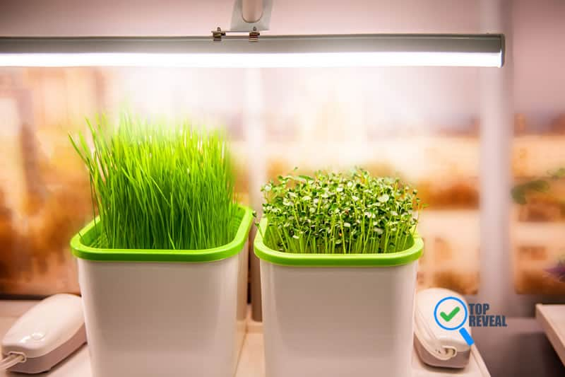 Benefits And Uses Of Smart Garden