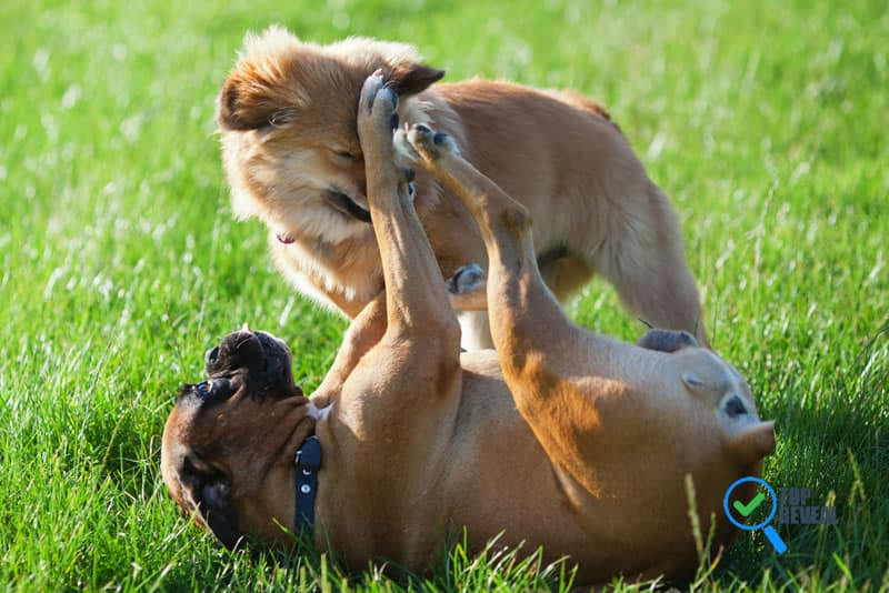 Things You Should Know About Fighting Dogs