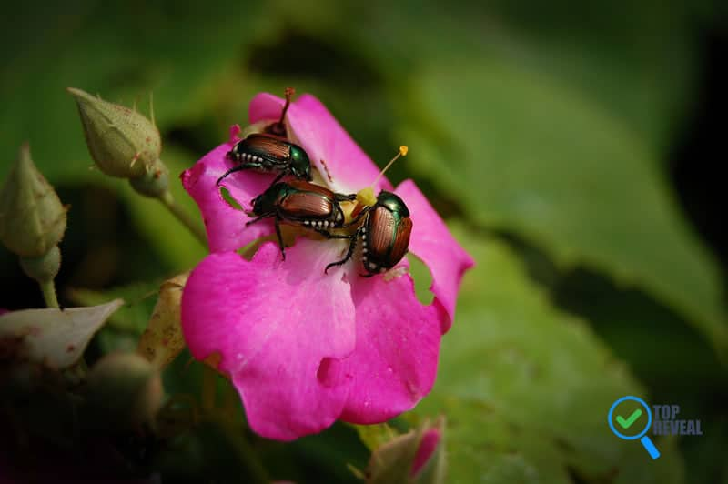 What Types of Pests Could Move from the Garden