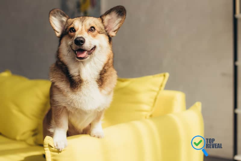 5 Ways to Make Your Home Dog Friendly
