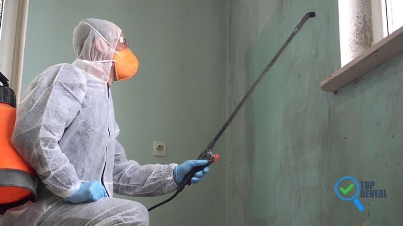 When to Hire a Mold Removal Service in Nashville