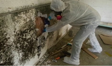 Hiring a Mold Removal Service