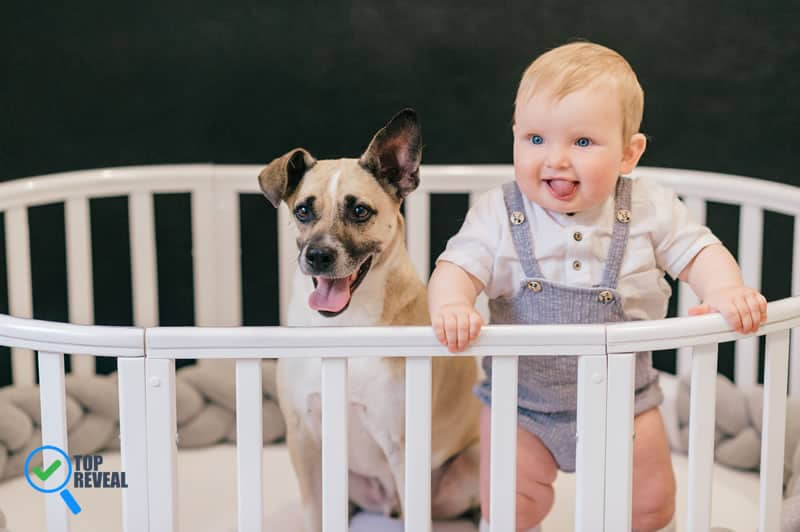DIY Wooden Baby Crib to Save You Money