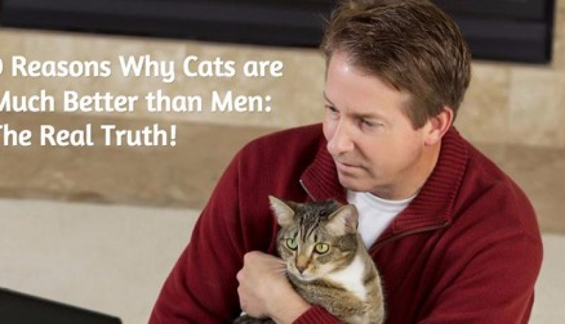 9 Reasons Why Cats are Much Better than Men: The Real Truth!