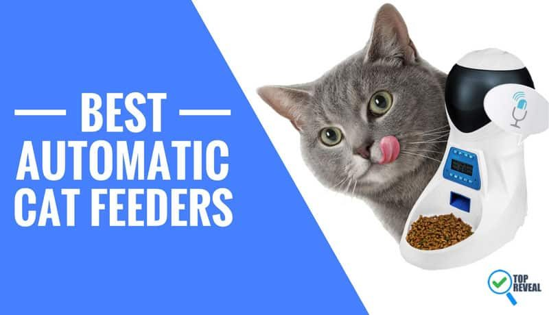 The 5 Best Automatic Cat Feeders Comparison Reviews (2018): They're the Cat's Meow!