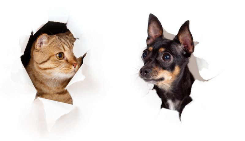 The Little Things That Separate and Unite Cat Owners vs Dog Owners