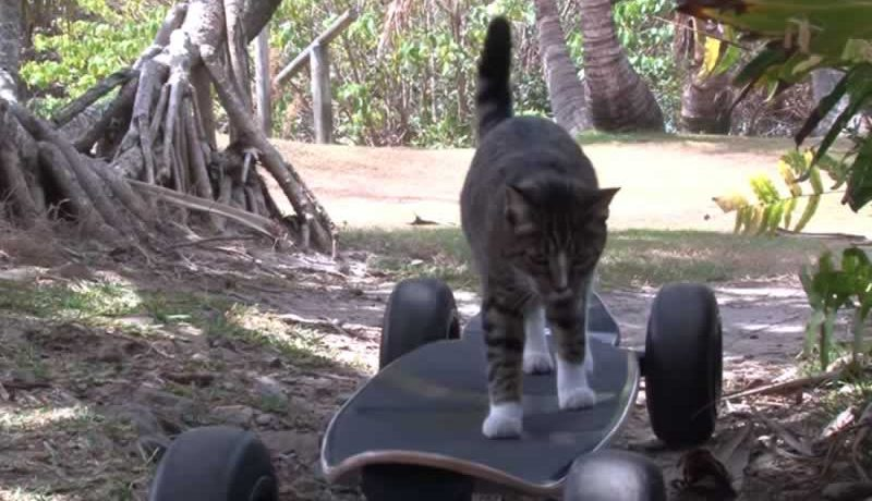 Your Jaw Will Drop When You See What This Skateboarding Cat Does.. Amazing