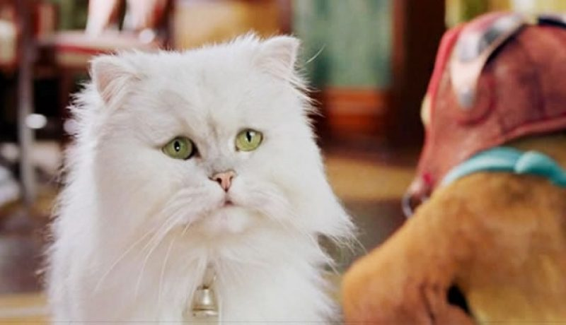 17 Best Cat Prime Movies You and Your Cat Will Love