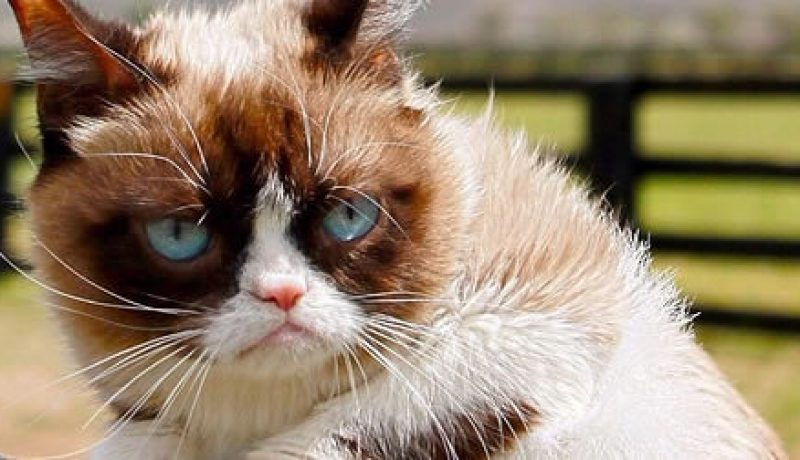 All about Grumpy Cat: Learn The Facts Behind Everyone Favorite Cat